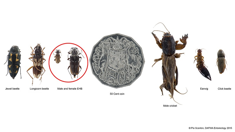 Pest and Disease Information Service (PaDIS) | Agriculture and Food