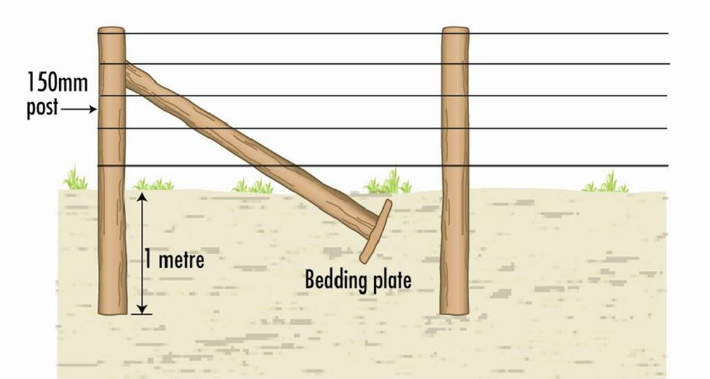 Fencing for beginners | Agriculture and Food
