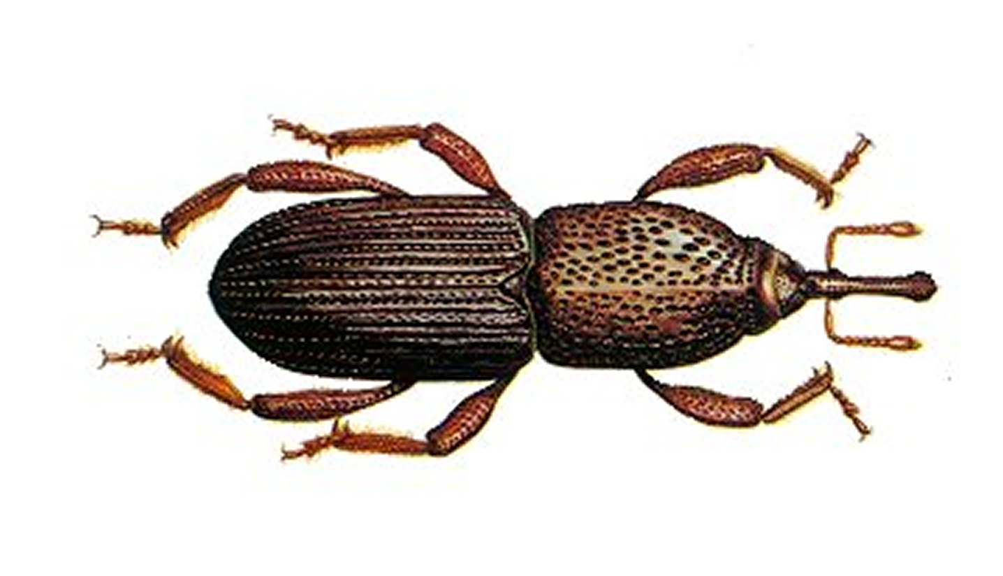 insect identification key