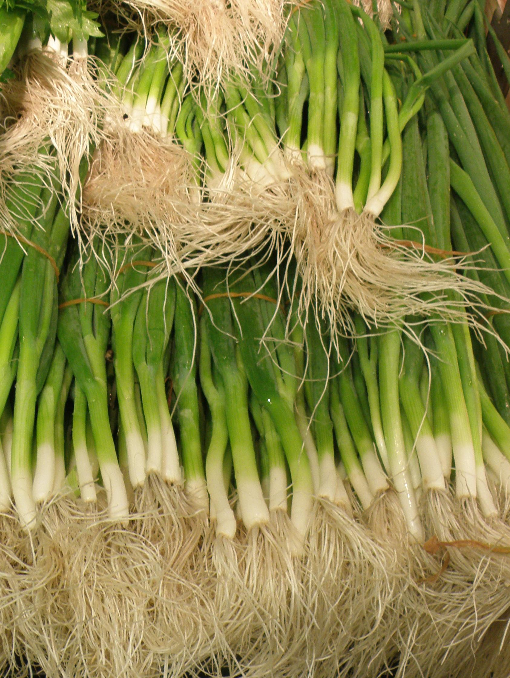 Growing Spring Onions In Western Australia Agriculture And Food