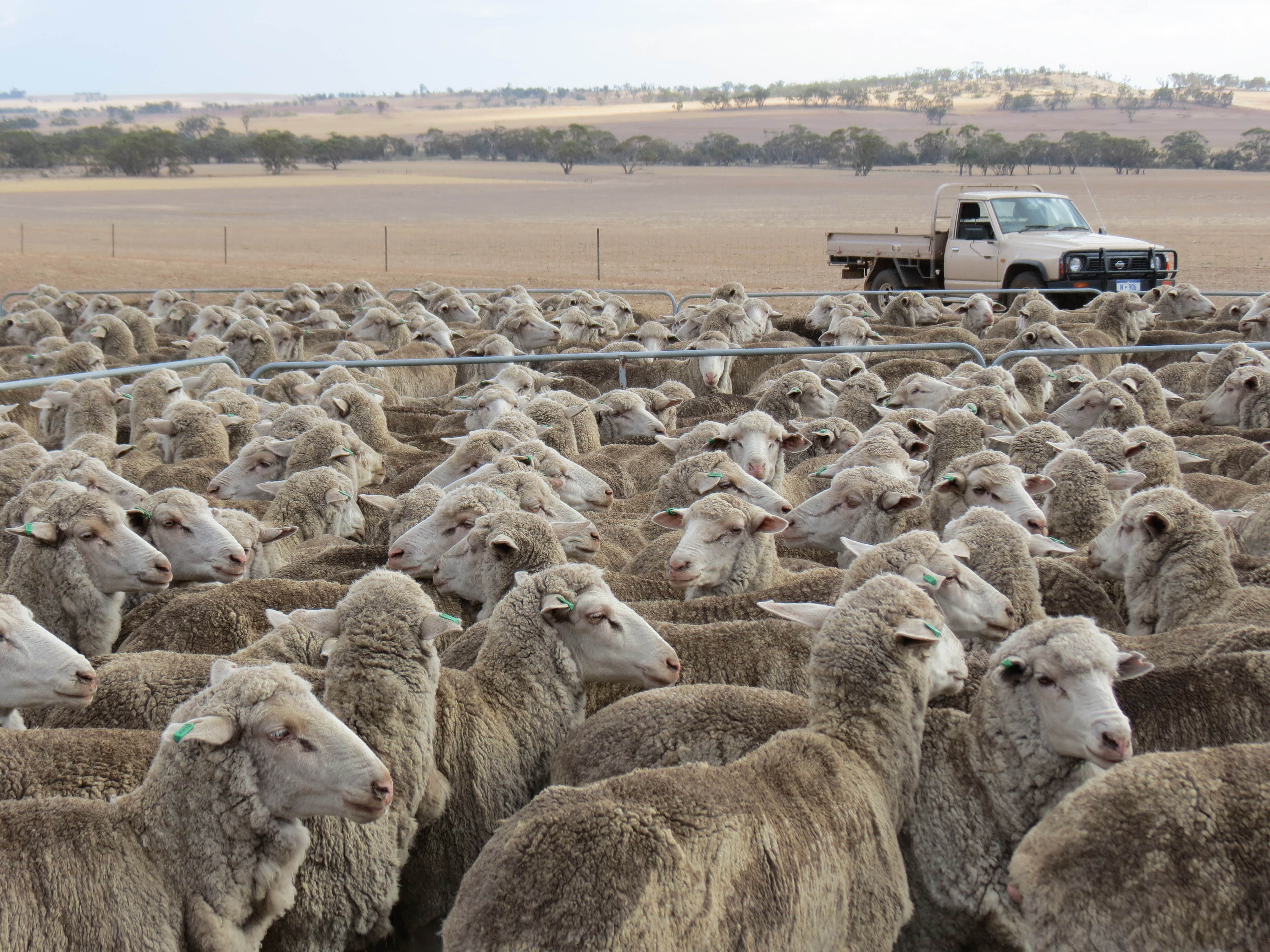 Workshops to help sheep producers detect livestock diseases