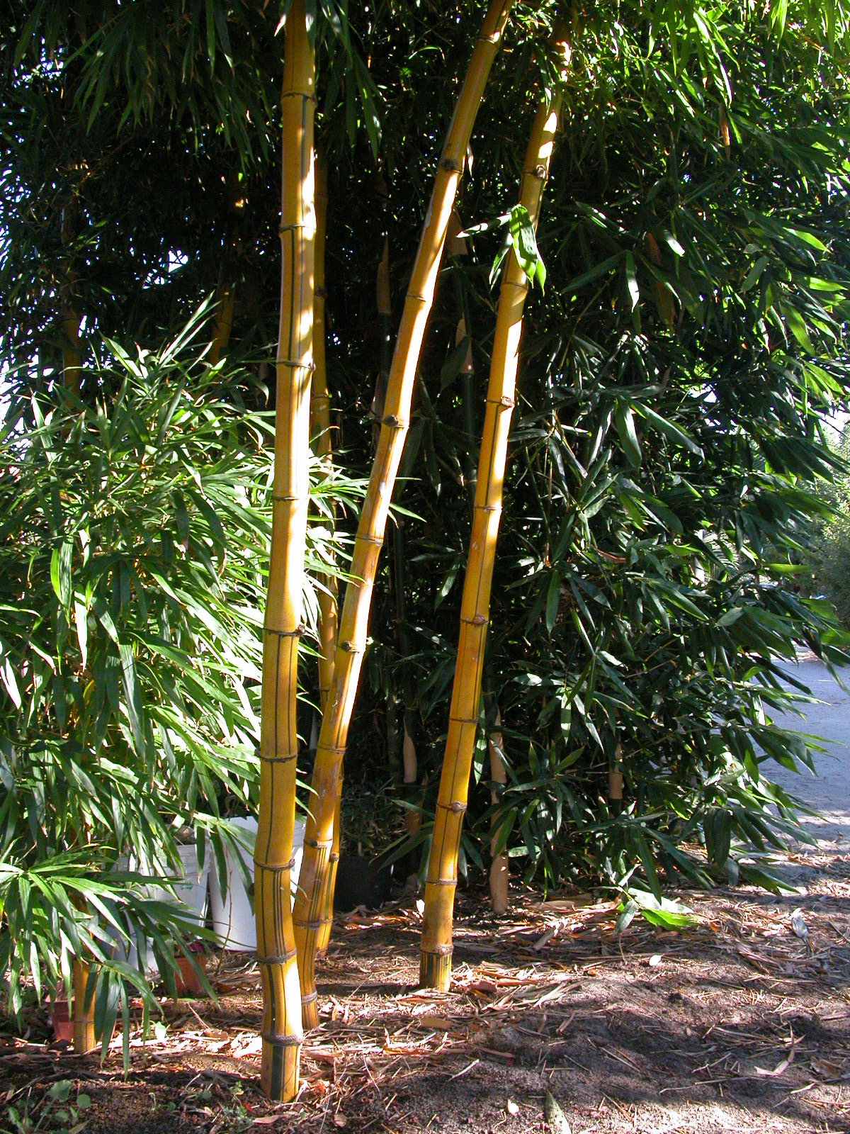 how to keep tropical trees warm in perth au winter