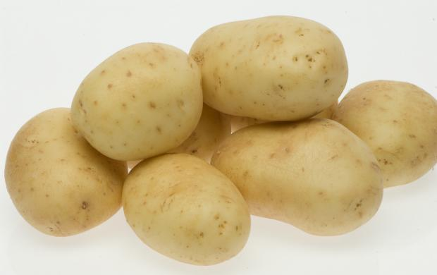 Six potatoes of the White Star variety