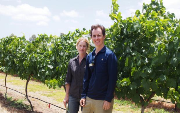 Department of Agriculture and Food research officer Richard Fennessy (right) and Brookland Valley Winemaker Manager Courtney Treacher (left) amongst the rows of alternative wine grape varieties under evaluation.