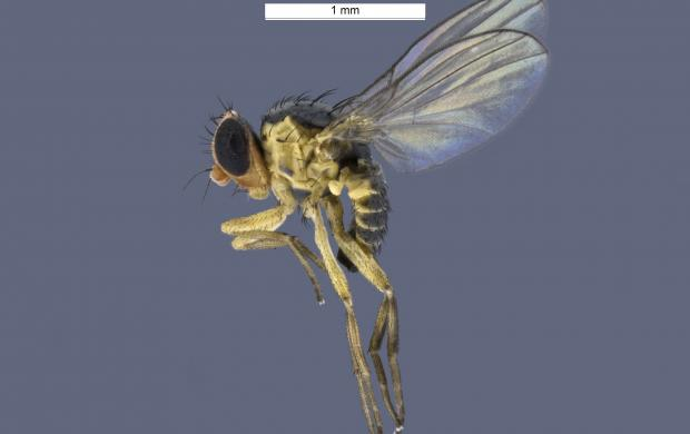 Extreme close up of a fly.