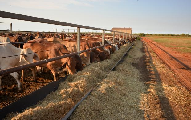 Agriculture and Food | Department of Primary Industries and