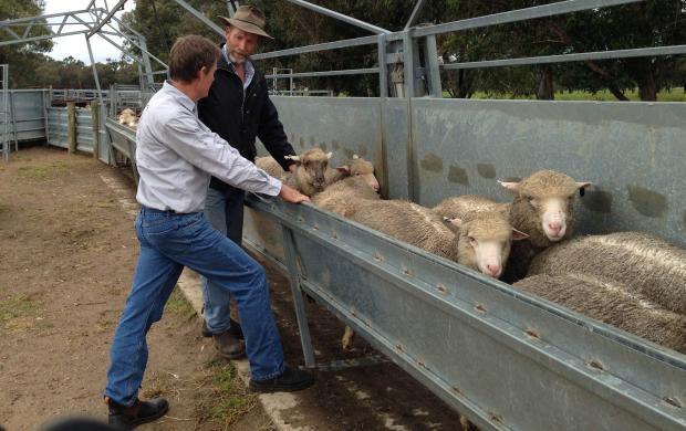 Livestock surveillance system at work