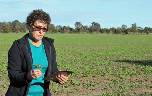 DAFWA officer with tablet in paddock