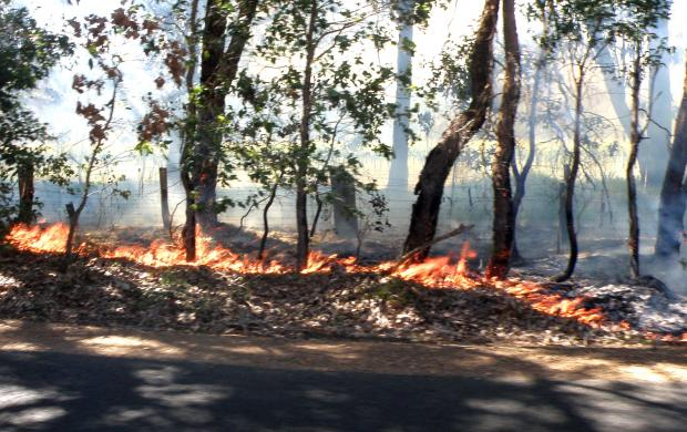 The Department of Agriculture and Food's STAR calculator can be used to predict and graph the smoke taint risk in many Australian grape growing regions.
