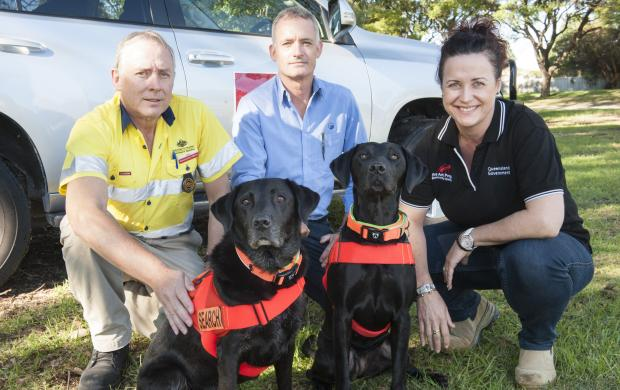 Specially-trained detector dogs from Queensland are being deployed in Perth as part of an eradication program against browsing ant