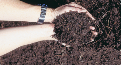 Hands holding some brown potting-mix-like compost