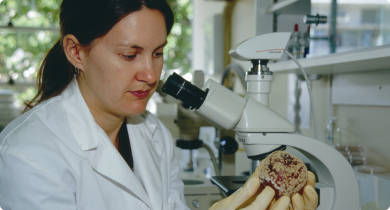 Pathologist in laboratory in front of microscpoe holding apple covered with fungal spores