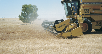 Header harvesting a field of yellow serradella