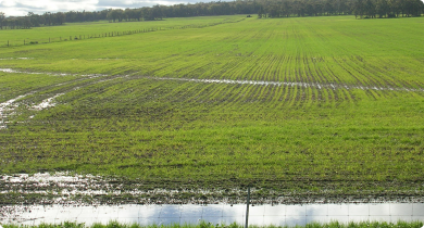 Waterlogging near Frankland