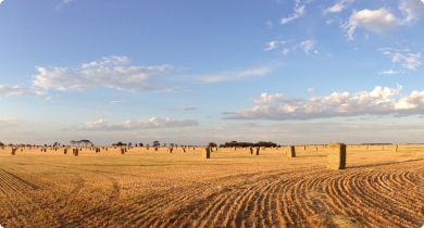 Export oaten hay baled in broadacre paddock