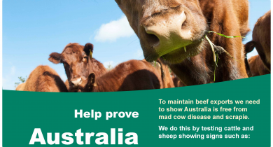 A poster with a picture of a cow and the words help prove australia is free from mad cow disease and scrapie.