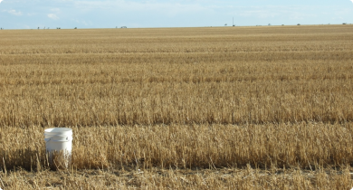 Cereal stubble paddock