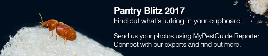 Banner image advertising Pantry Blitz 2017