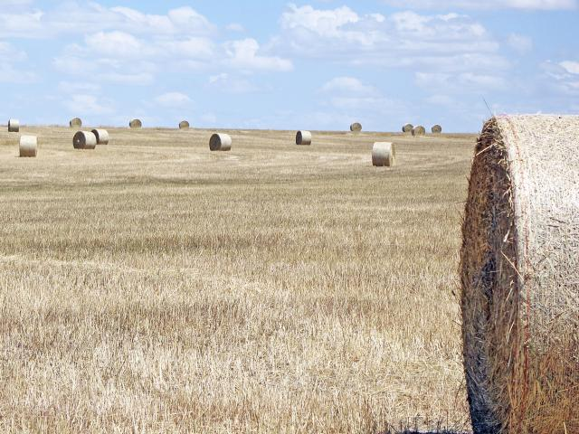 Hay bails in the paddock at Greenhills.