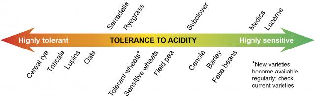 Showing the relative tolerance of crop and pasture species to soil acidity and aluminium toxicity.