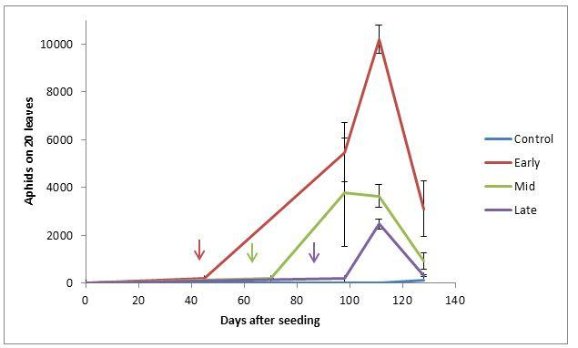 Figure 1. Green peach aphid population dynamics from different dates of introductions ± standard error (SE). Arrows indicate dates of aphid introductions.