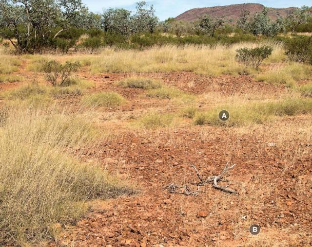 Photograph of hard spinifex plain pasture in fair condition