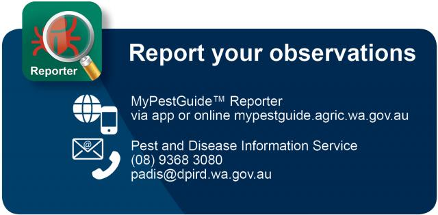 Report your observations using the MyPestGuide Reporter app or online at mypestguide.agric.wa.gov.au.