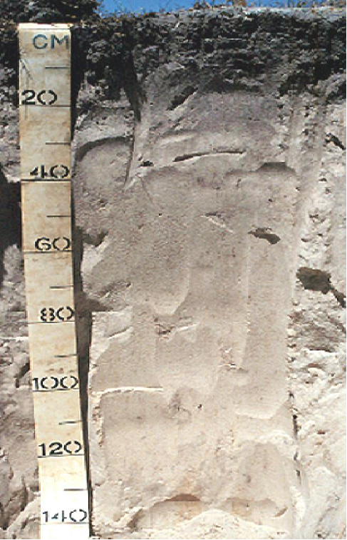 Soil profile showing dark grey sands to 20 centremetres below the soil surface, then light grey to white soils extending to 140 centremetres.