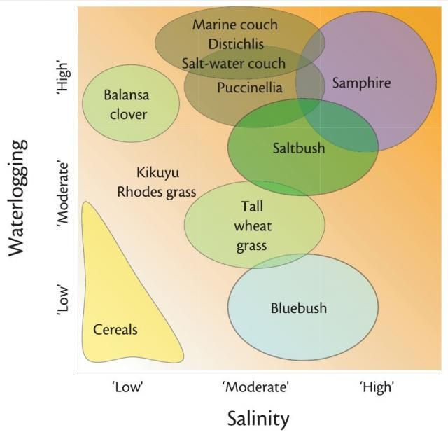 Diagram showing relative tolerance of salt and waterlogging by saltland pasture species