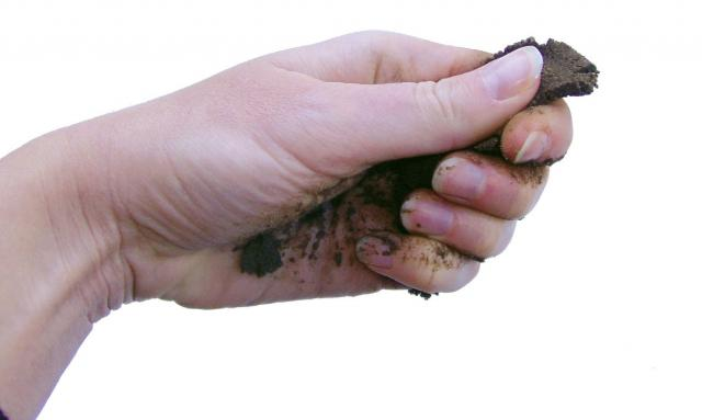 Photograph of a hand moulding the soil sample into a ribbon