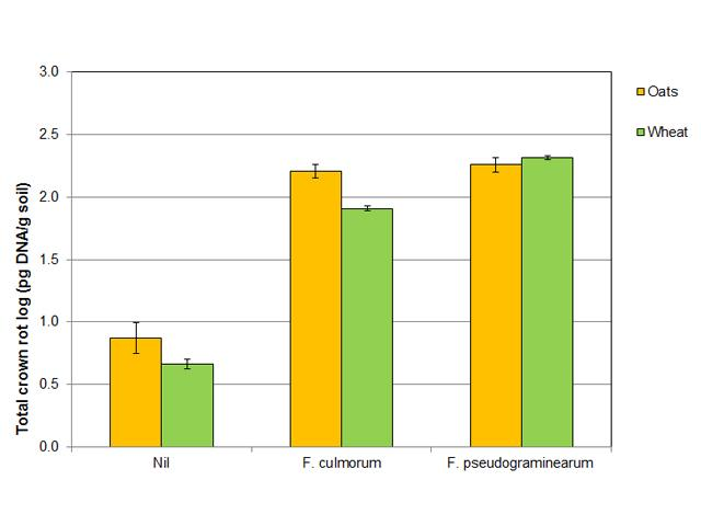 Figure 5. Total crown rot inoculum in soil collected in April 2017 from Nil and inoculated plots with Fusarium pseudograminearum and F. culmorum of oats and wheat at the 2016 Pingelly trial site.