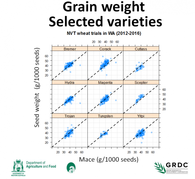 Figure 1: Grain weight (g/1000seeds) of selected wheat varieties relative to the grain weight of Mace wheat (g/1000seeds) in NVT's from 2012 - 16.