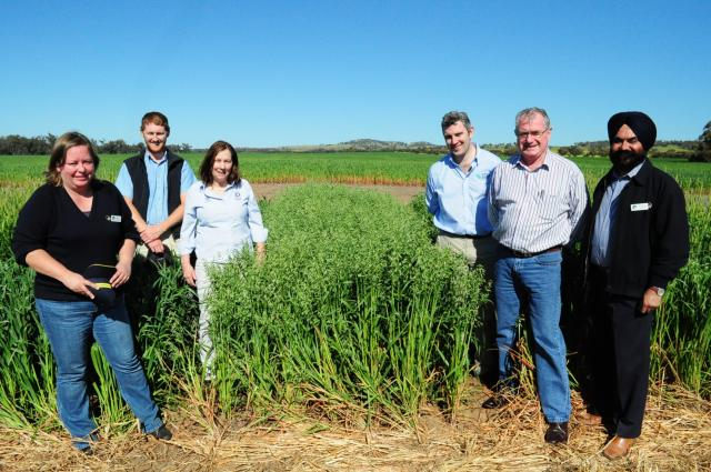 National Oat Breeding team members