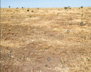 Photograph of Mitchell grass alluvial plain pasture in poor condition