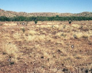Photograph of Mitchell grass upland pasture in poor condition