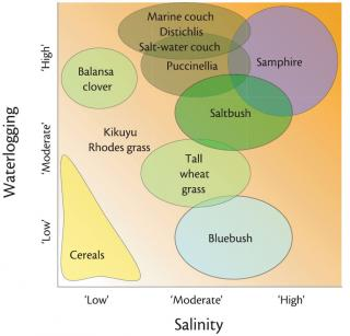 Diagram showing the relative rankings of different saltland pasture species in the salinity-waterlogging matrix