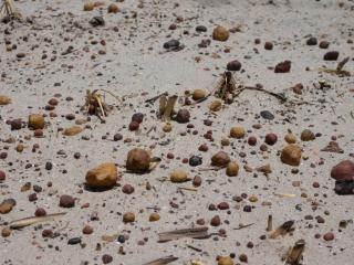Closeup photograph of gravel spread on a sandy soil to prevent wind erosion