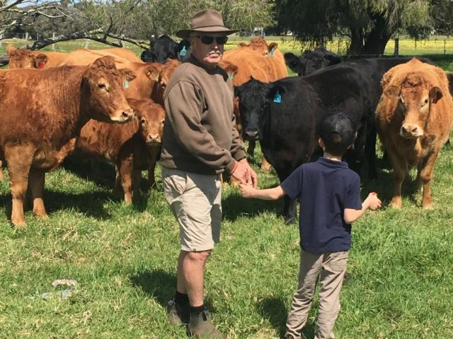 Kevin Nettleton with Limousin cattle.