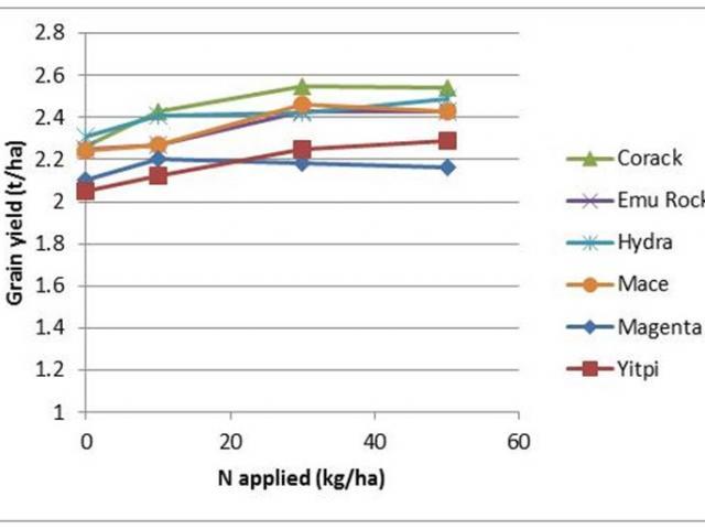 Effect of applied nitrogen (kg/ha) on grain protein of selected wheat varieties