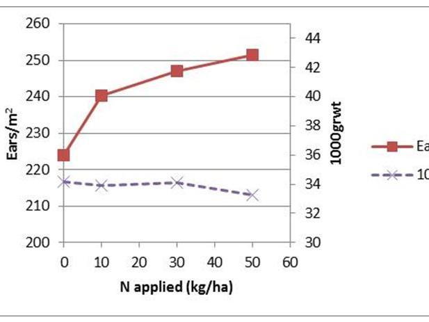 Effect of applied nitrogen on ears and grain weight