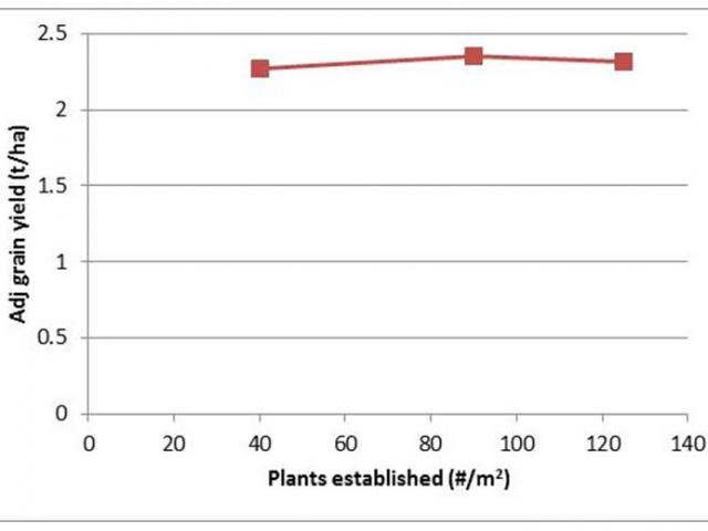Effect of increasing plant density on grain yield