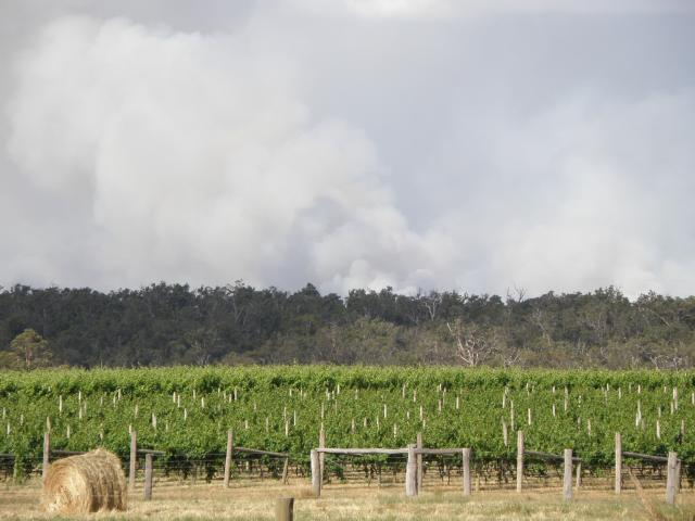 A vineyard with smoke rising from behind a ridge
