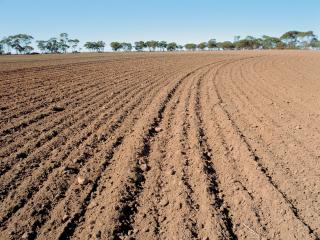 Ploughed paddock