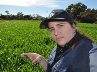 Wheat growers have been advised to check the 2017 disease ratings when selecting varieties, to avoid the risk of crop losses this season. DAFWA's  Ciara Beard checks for powdery mildew.