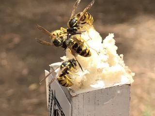 Wasps sitting on a white, ice-like block on top of a pole.