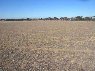 Dry paddock with prostrate stubble.