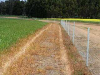 Chemical created firebreak along a fence line