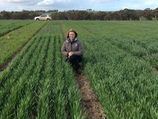 The Department of Primary Industries and Regional Development's development officer Georgia Trainor said the new barley variety guide provide growers with a number of options to consider for next season.