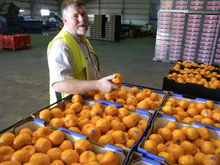 Department of Primary Industries and Regional Development technical officer Kevin Lacey has been recognised for his contribution to the development of the citrus industry with a Service to Industry Award from WA Citrus.