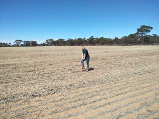 Woman digging in stubble paddock